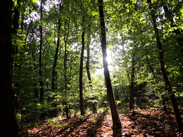 Wald in Moorkaten - Bildergalerie