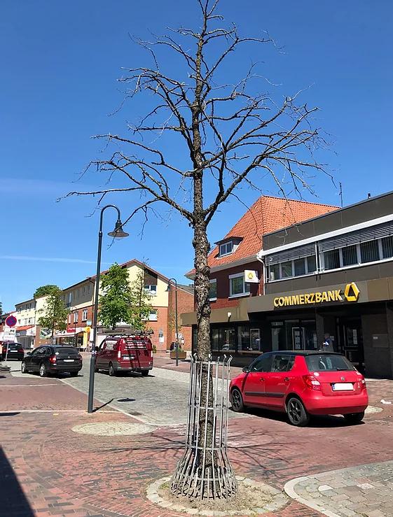 Initiative: Baumpatenschaften